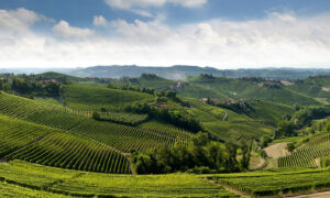 Meet the Kings of Italian Wine