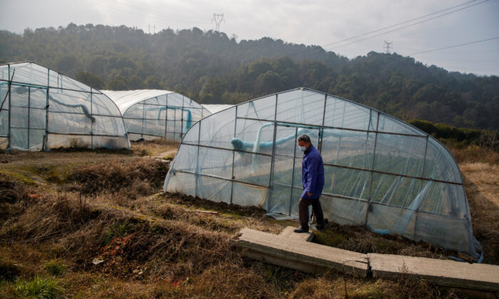 A strawberry farmer walks past a greenhouse at his farm where sales have been severely affected by the coronavirus outbreak in Jiujiang, Jiangxi Province, China, on Feb. 4, 2020. (Thomas Peter/Reuters)