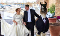 Man Brings a Llama in a Tux to His Sister's Wedding, Fulfilling Promise Made 5 Years Ago