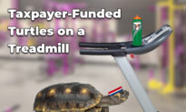 Ernst Blasts Feds' Wasteful 'Turtles on a Treadmill' Study as Senate Panel OKs Her Anti-SWAG Bill 5:3