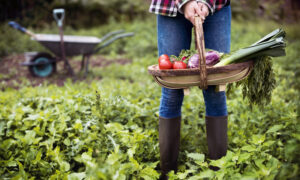 Tips for Starting a Vegetable Garden