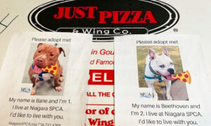 Pizza Shop Puts Photos of Shelter Dogs on Delivery Boxes to Help Them Find Homes