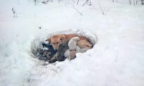 Dog That Was Rescued With Her Puppies From a Snowdrift Is Now Thriving at Her Forever Home