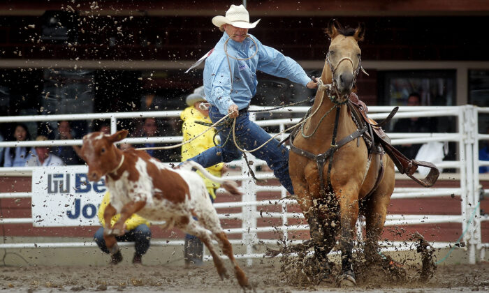 Clif Cooper leaps off his horse while chasing down a calf during the tie-down roping competition in the rodeo at the Calgary Stampede in Calgary, Alberta, Canada, on July 11, 2011. (Mario Tama/Getty Images)