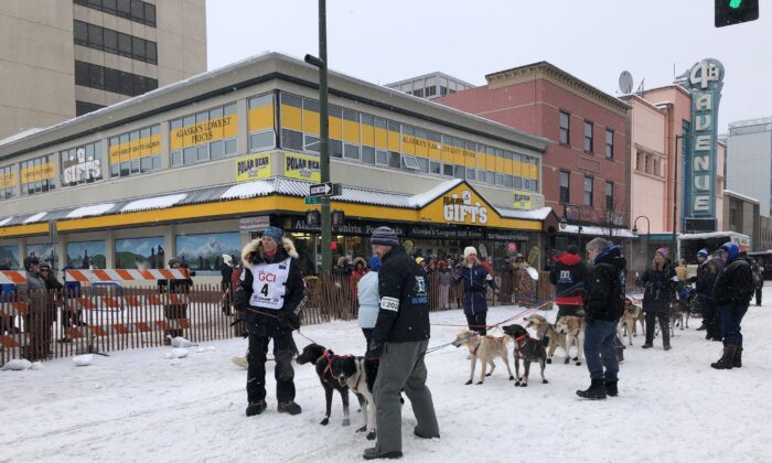 The 2020 iteration of the Iditarod Trail Sled Dog Race kicks off in Anchorage, Alaska, on March 7, 2020. (Courtesy of Katie Harp)