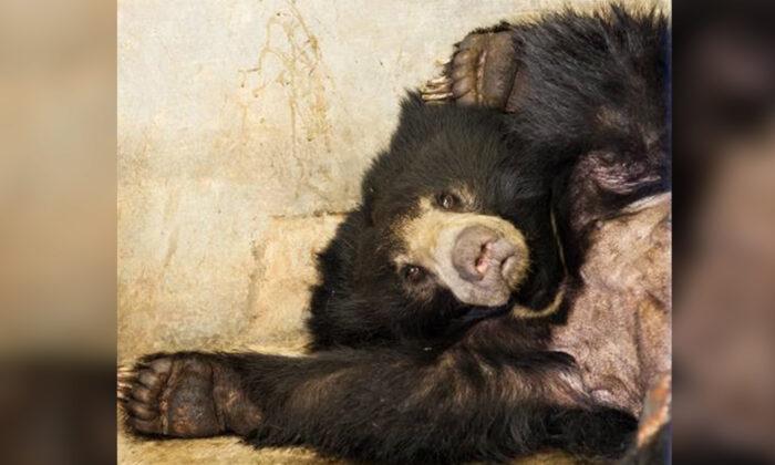 (Photo courtesy of Wildlife S.O.S)