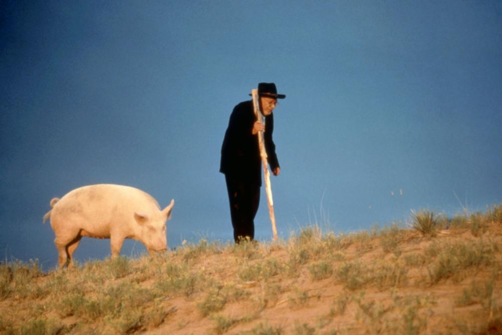 old man and a pig in 'The Milagro Beanfield War'