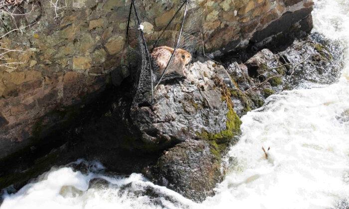 (Photo courtesy of Animal Rescue League of Boston)