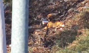 Video: Dog Rescuers Try to Save Fearful, Starving Stray Dog Living by Busy Freeway in LA