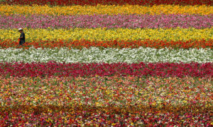 US Flower Industry Suffers Due to Pandemic
