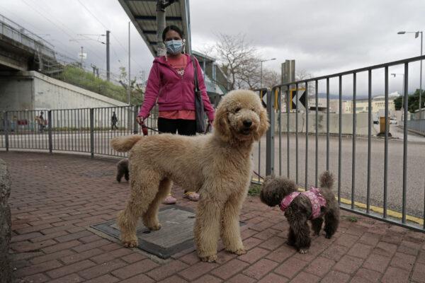 Virus Outbreak Pets Hong Kong