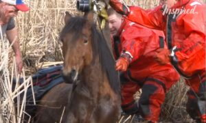 Dramatic Rescue Of A Freezing Horse
