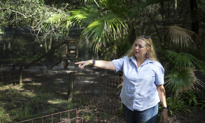 "Carole Baskin, founder of Big Cat Rescue, walks the property near Tampa, Fla.  on July 20, 2017. Baskin was married to Jack ""Don"" Lewis, whose 1997 disappearance remains unsolved and is explored in a new Netflix series ""Tiger King."" (Loren Elliott/Tampa Bay Times via AP, File)"
