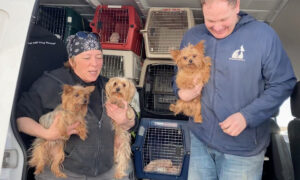 Non-Profit on a Mission to Save 'Retired' Mill Dogs and Find Them Forever Homes