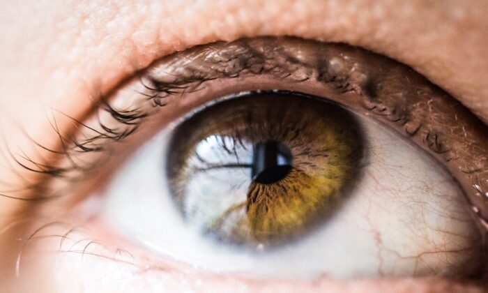 Close-up photo of a human eye. (Vanessa Bumbeers/Unsplash)