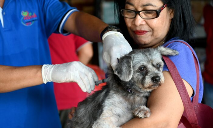 Dog being vaccinated against rabies in Bali Indonesia September 28, 2019. (Sonny Tumbelka/Getty Images)