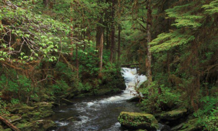 Stream near Lunch Creek Trail, Alaska, where Jennifer Treat and her son Jaxson Brown were lost on Wednesday, March 25. (Alaska.org)