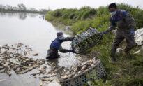 China Reports Severe Epidemic of Wheat