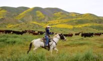 California's Resilient Ranchers and Farmers Respond to Surging Demand