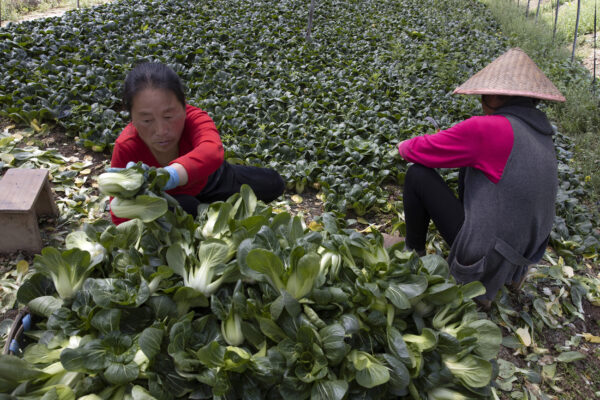 Virus-Wuhan-Struggling-Farmers