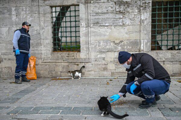 TURKEY-HEALTH-VIRUS-ANIMALS