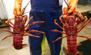 Australian Seafood Exports to Taiwan Twice a Week