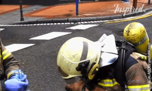 Dog Rescued From a Burning House
