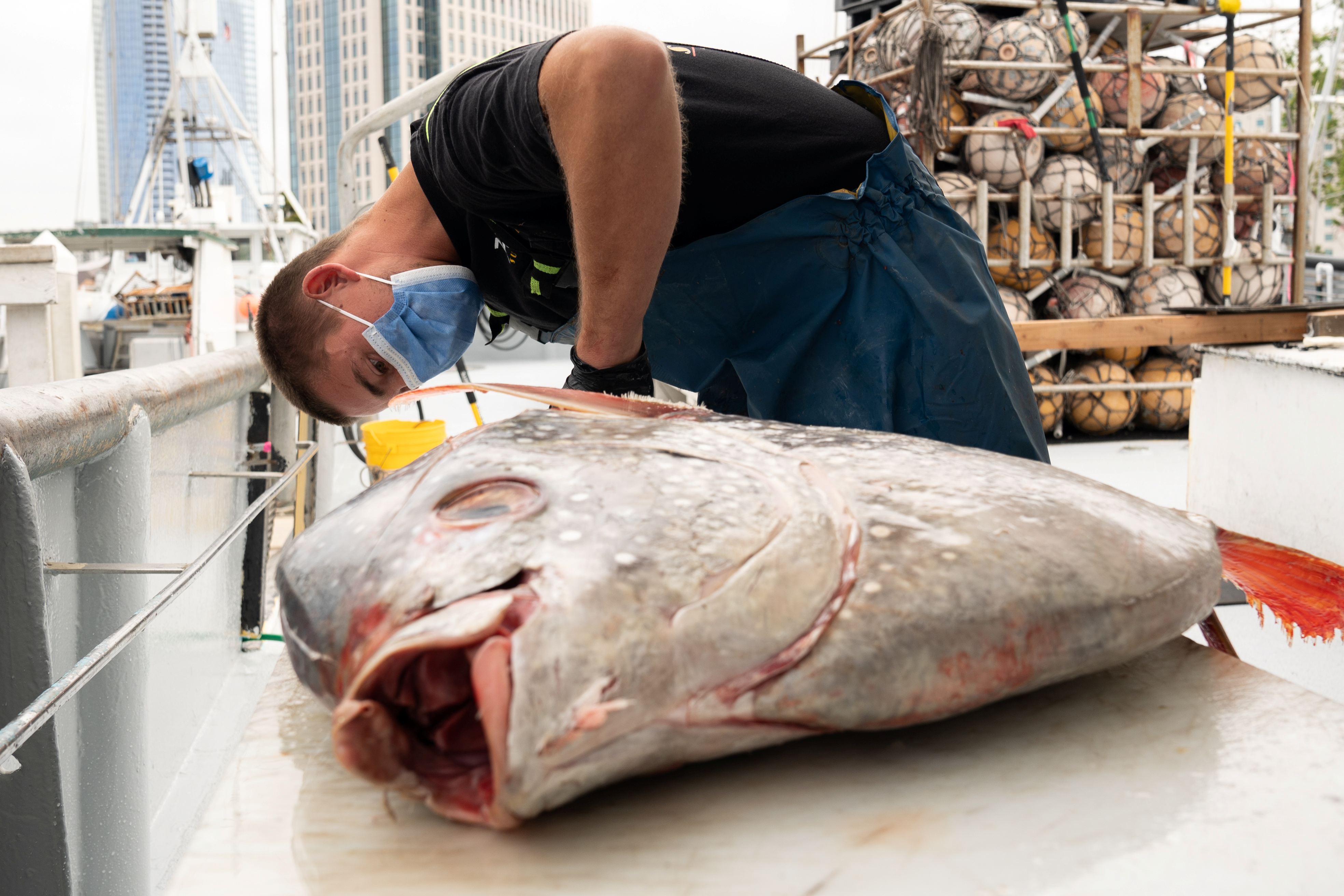 Commercial fisherman Ben Stephens cuts an opah fish onboard the Gutsy Lady 4, a fishing vessel, docked in Tuna Harbor in San Diego, Calif., U.S., on April, 2020. (Bing Guan/ Reuters)