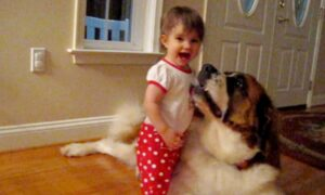 Adorable Babies Playing With Dogs