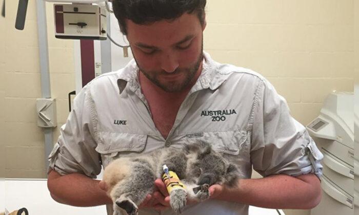 (Photo courtesy of Australia Zoo)