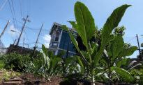 Vegetable Seed Demand Grows Amid COVID-19 Boredom, Fears
