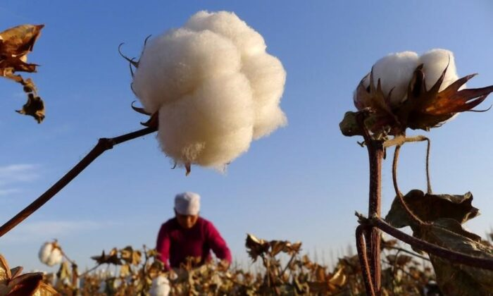 A farmer picks cotton from a field in Hami, Xinjiang Uygur autonomous region, China, on Nov. 1, 2012. (China Daily/File Photo/Reuters)