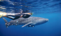Dreaming of Travel: The World's Best Underwater Adventures