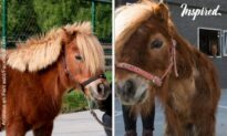 Pony With Overgrown Hooves Is Saved