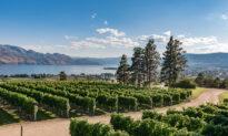 Okanagan Valley: The Edge of Viticulture