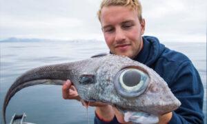 Fisherman Reels In Dinosaur-Like 'Ghost Shark' From 800 Meters Underwater Off Coast of Norway