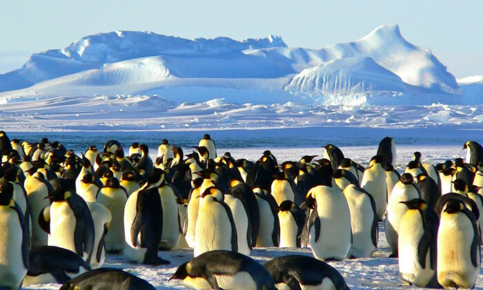 Penguins in Antarctica. (Pixabay)