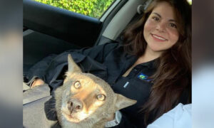 Woman Finds 'Dog' Hit by Car and Rescues Him Only to Discover He's Actually a Coyote