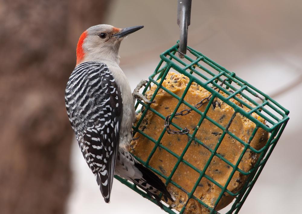 suet feeder
