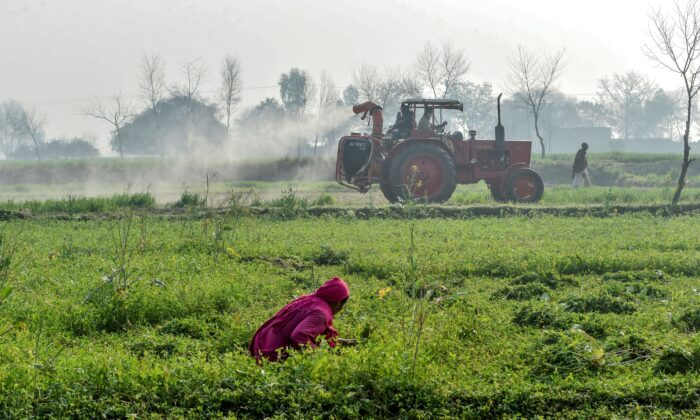Officials of the Agriculture Department on a tractor spraying pesticides to kill locusts as a farmer works in a field in Pipli Pahar village in Pakistan's central Punjab province on Feb. 23, 2020. (Arif Ali/AFP via Getty Images)