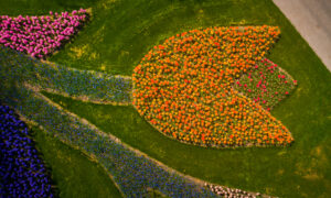 Photographer Captures Images of the World's Most Beautiful Flower Garden With No Visitors