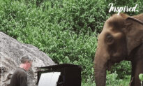 Pianist Plays Piano For Blind Elephant