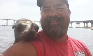Kayaker Surprised When Adorable Baby Seal Climbs Aboard and Cuddles as He Takes Selfies and Videos