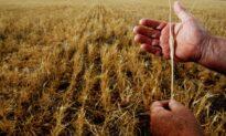 Australian PM 'Hopes' China's Barley Probe Isn't Retaliation for Virus Investigation