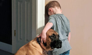 Dog Accompanies 3-Year-Old Boy During Timeout So He Won't Feel Lonely