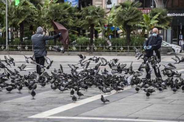 Pigeons-Milan