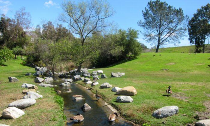 A file photo of Laguna Niguel Regional Park in Laguna Niguel, Orange County, Calif. (Wikimedia Commons)