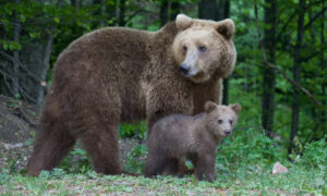 California Woman Fends Off Bear Attack With Laptop
