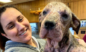 Abandoned Dog That Was Sick and Mange-Ridden Nursed Back to Health, Is Now Unrecognizable
