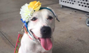 From Bait Dog to 'Disney Princess': How a Bonnet-Wearing Canine Became the Face of Hope